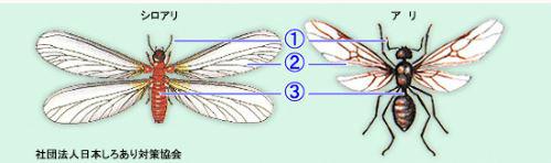 羽根あり見分け方